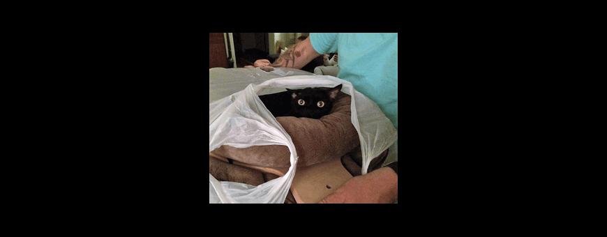 Arbre à chat, les pièces