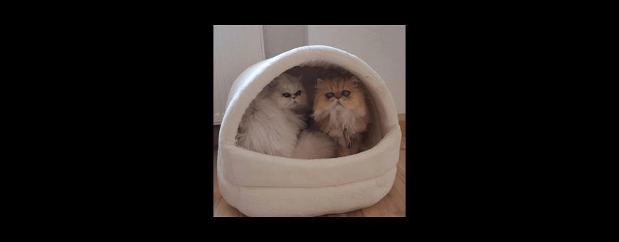 Dome et Maison