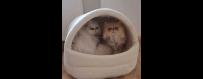Kuschelhöhlen