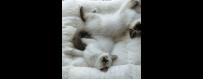 Pillows/Beds