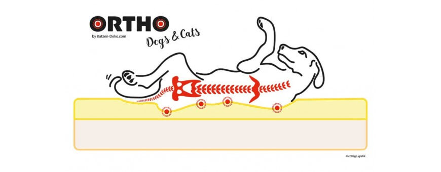 CAMAS orto-DOGS